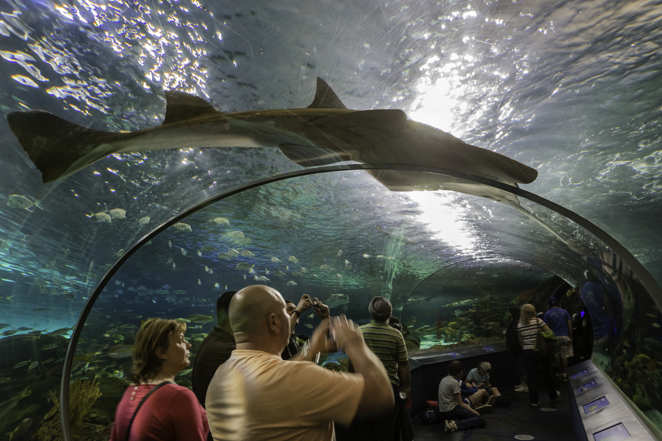 Man swims naked with sharks in Toronto aquarium