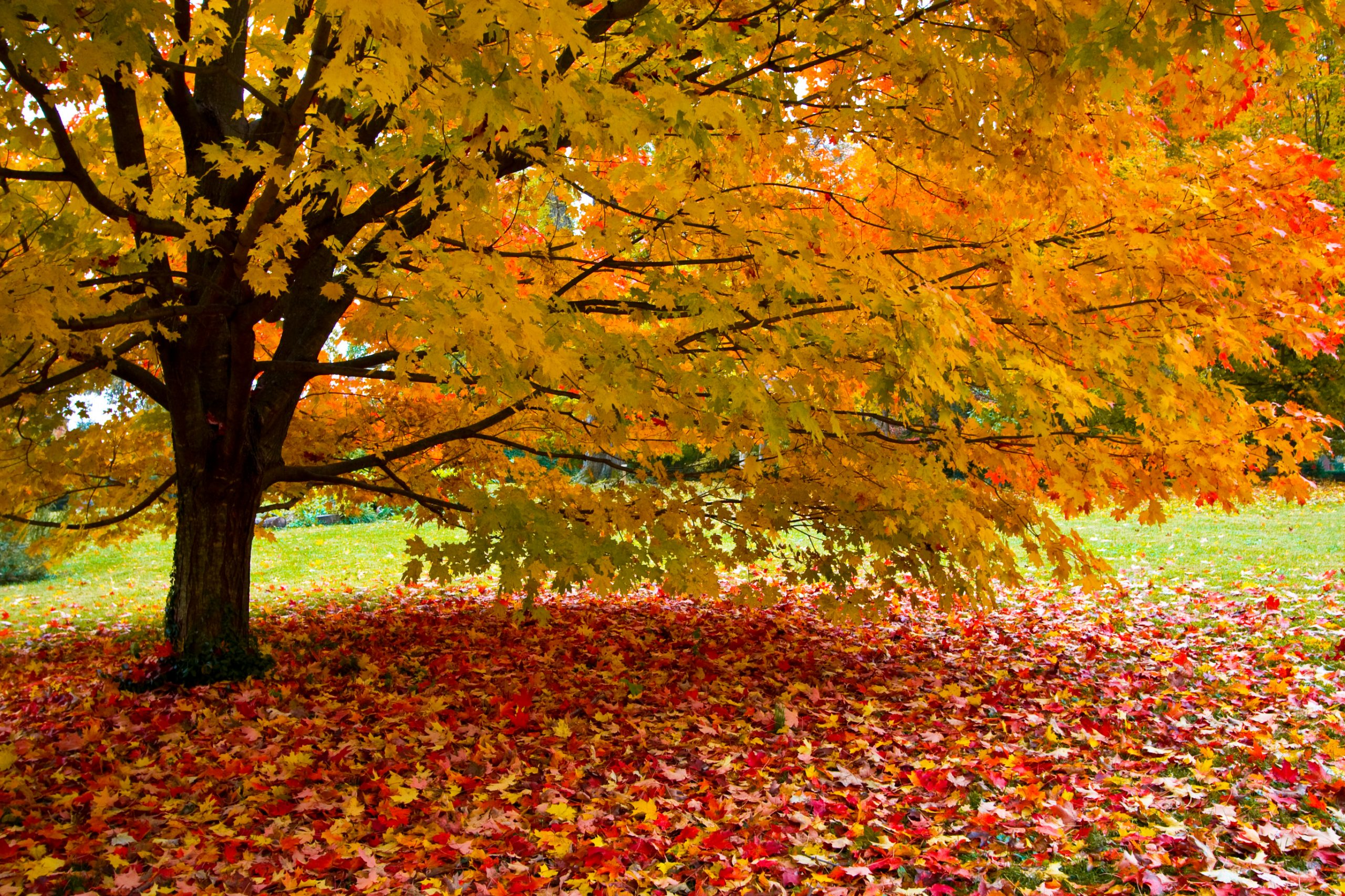 Lazy people rejoice - Why you should't rake your lawn