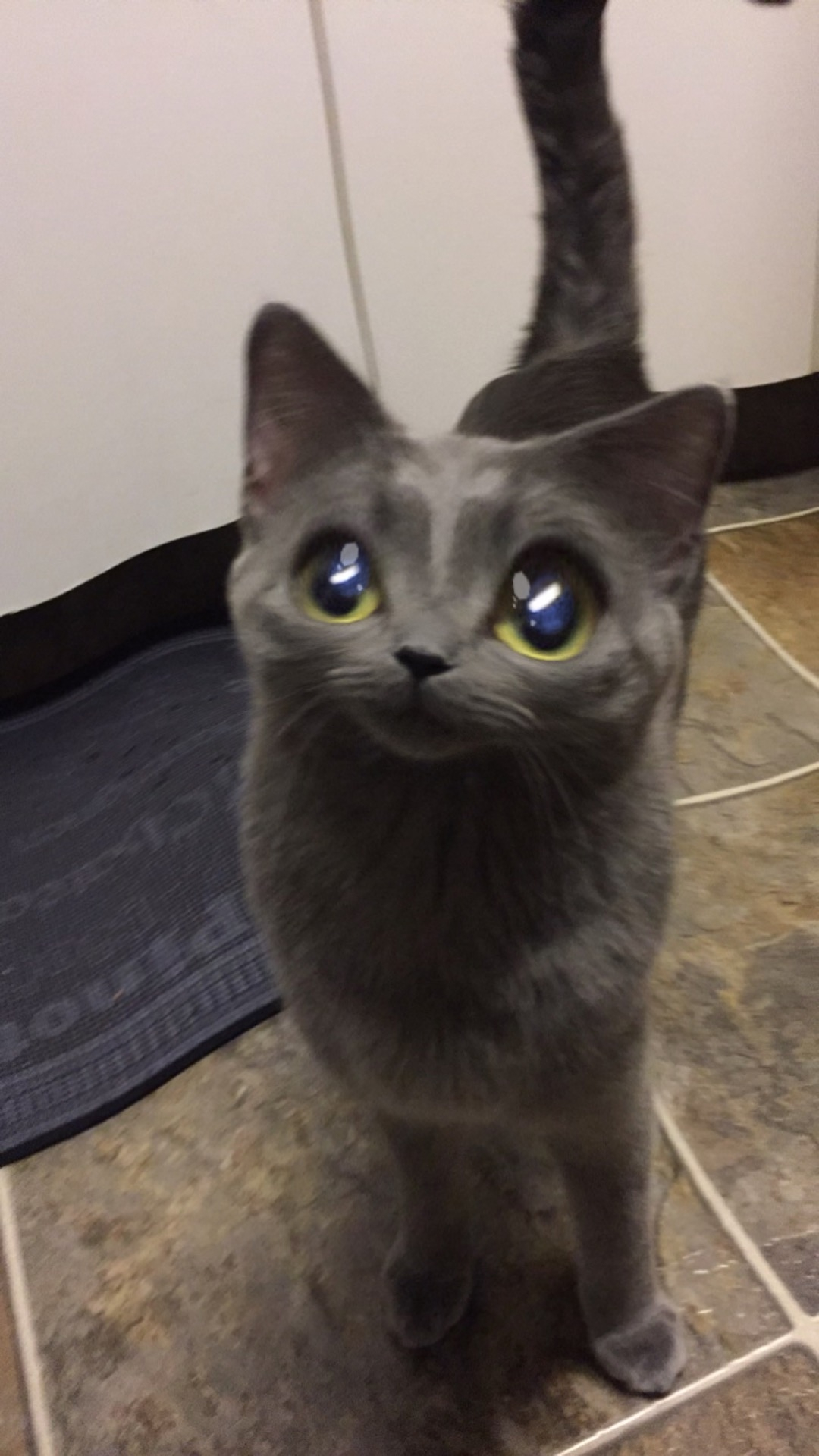 Snapchat Filters on Your Pets!