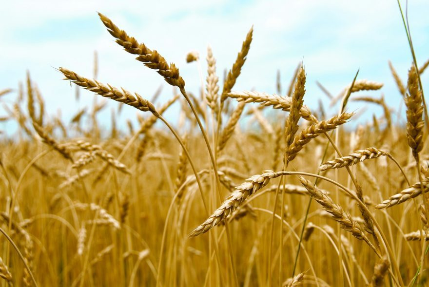 Upcoming weather patterns could affect Saskatchewan grain prices