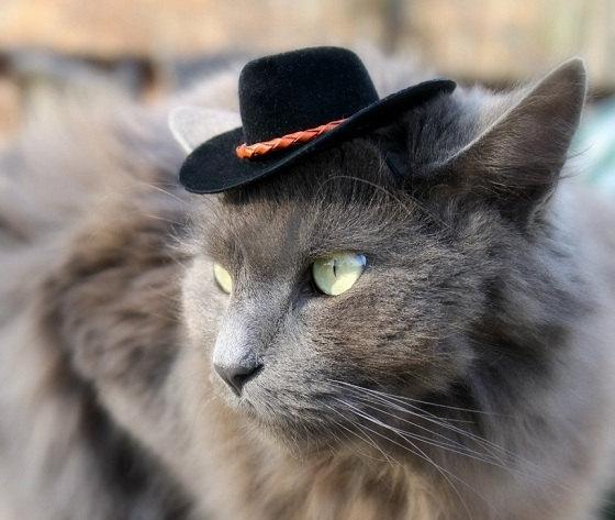 Massive cat adoption promo on at Regina Humane Society