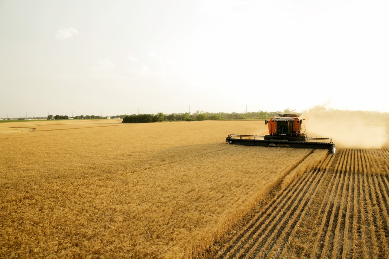Harvest estimated at 20 to 30 percent complete in Southeast Saskatchewan