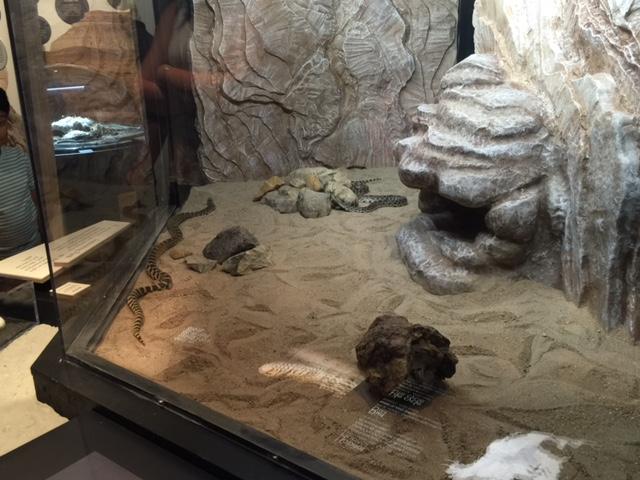 Royal Saskatchewan Museum's snake exhibit to close Monday