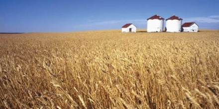 Canada's grain production gets vote of confidence from Chinese Consul General