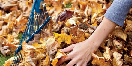 Fall yard waste being collected by City of Regina