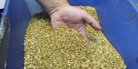 Farmers have mixed reaction to Grain Commission use of surplus funds