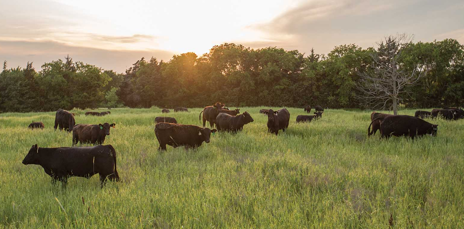 Sask Stock Growers reach grazing agreement with Parks Canada at Grasslands National Park
