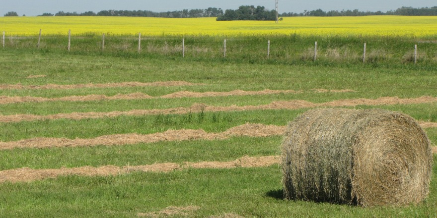 Crop development on par for this time of year; provincial crop report