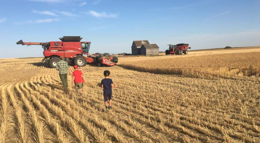 Harvest resumes across Saskatchewan after weeks of delay caused by rain and snow
