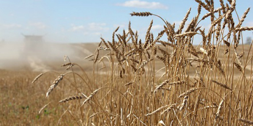 Experts predicting improved wheat prices for Saskatchewan this winter