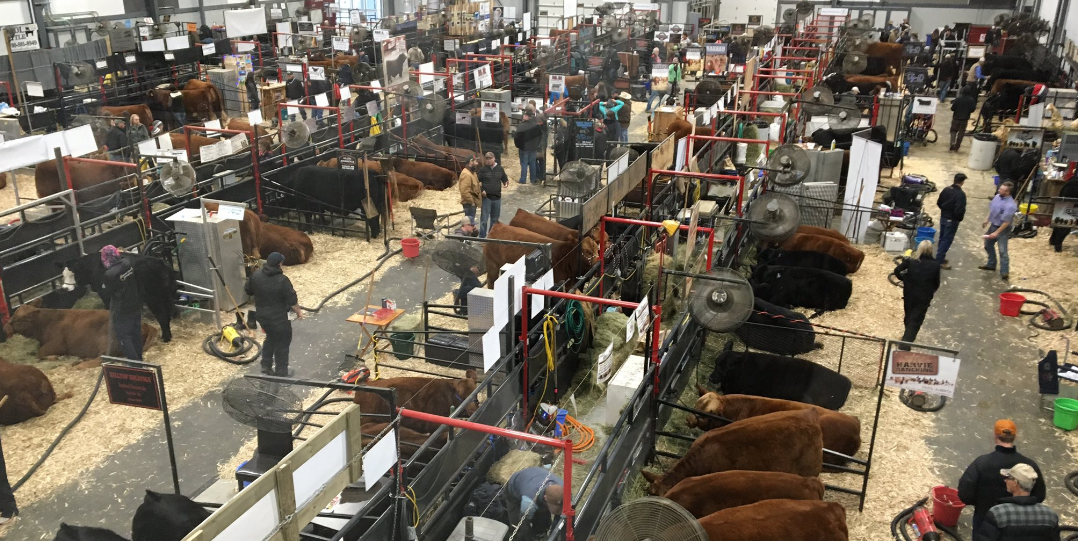 Canadian Western Agribition opens Monday