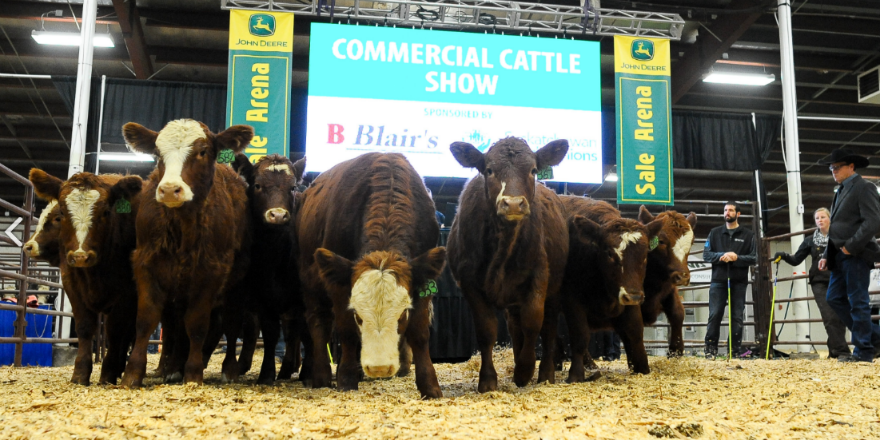 Canadian Western Agribition opens Monday in Regina