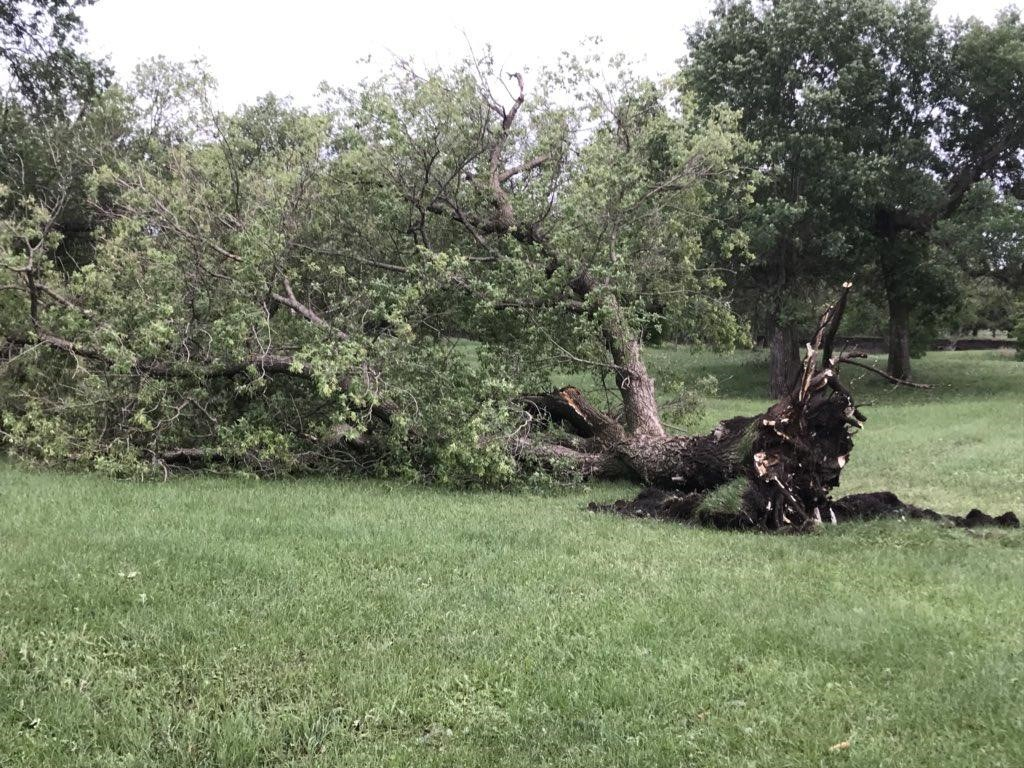 Southeast storm leaves damage across the region