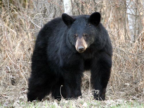 Dangerous animal alert issued after bear sightings in Douglas Provincial Park