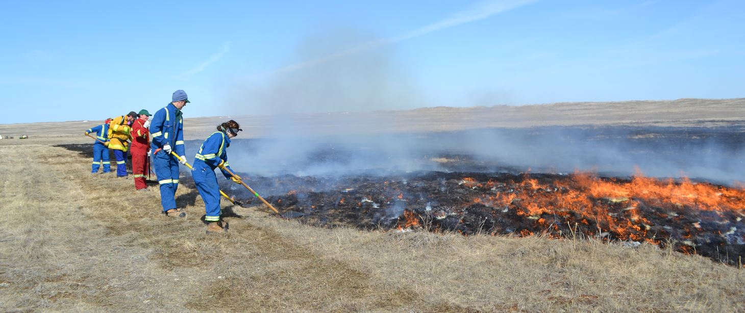 Researchers use grass fire in SW Sask to rejuvenate native prairie