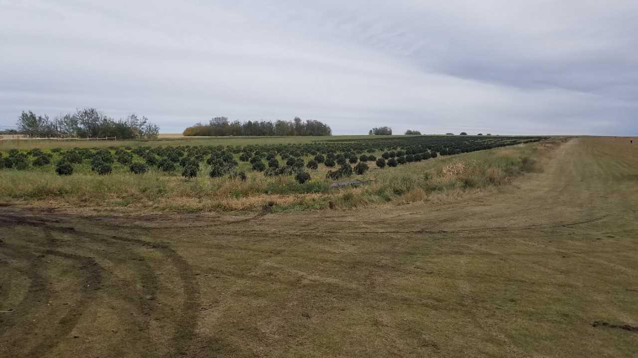Large-scale marijuana growing operation shut down in rural Saskatchewan