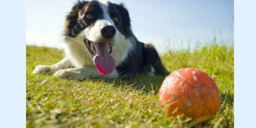 Pets set to take over Wascana Park for Regina Humane Society
