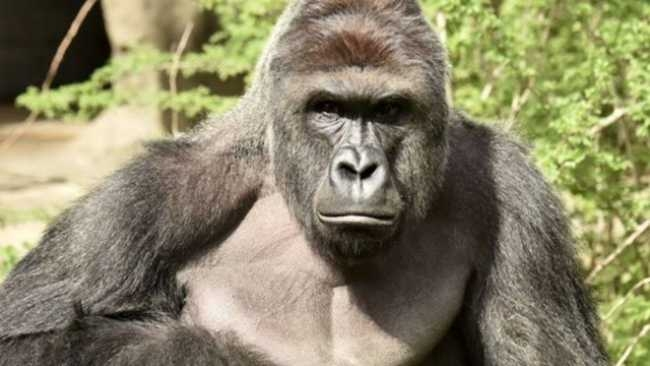 """Dumbest Parts of 2016 #1 """"Harambe"""""""
