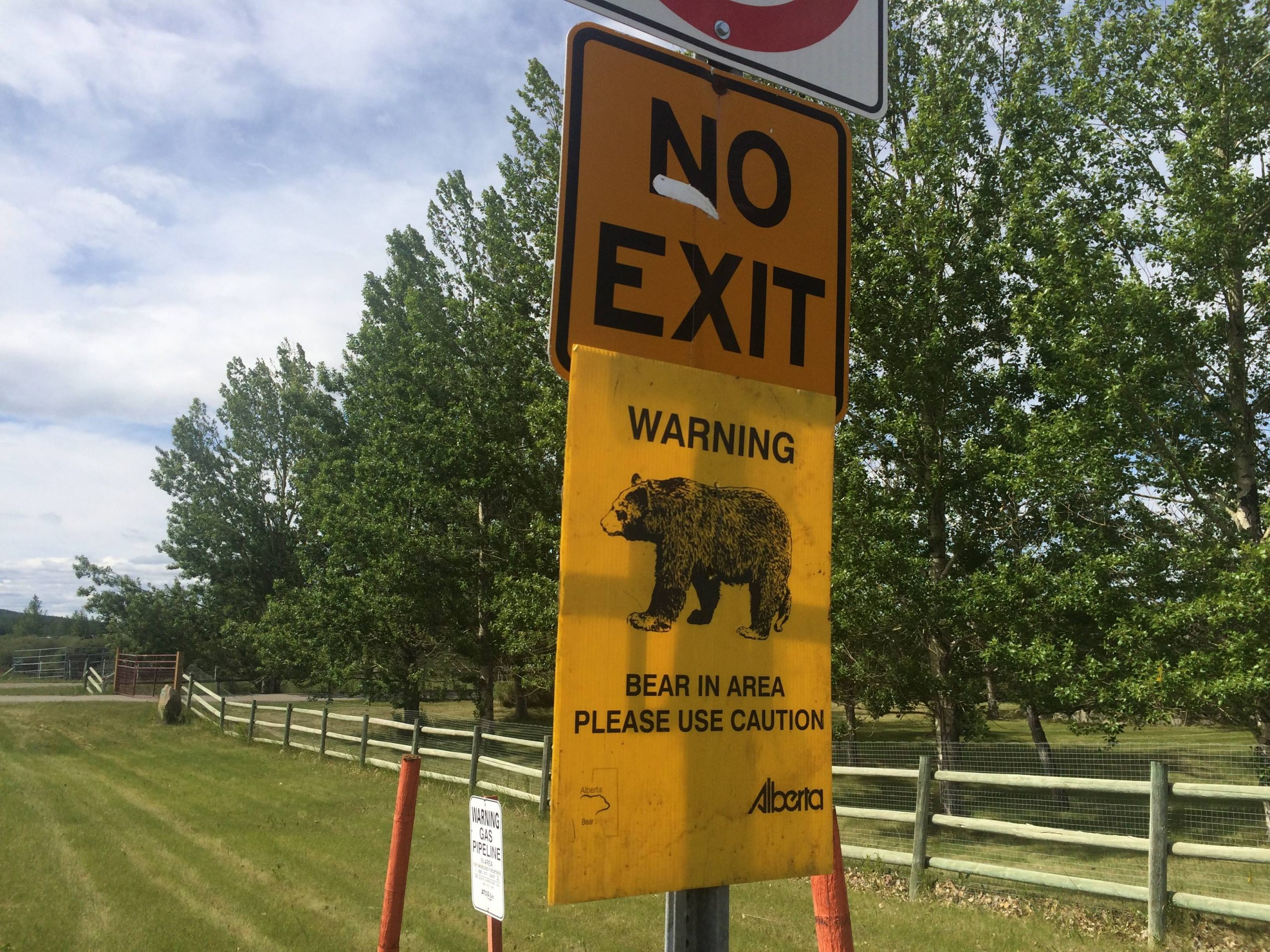 Bear Sightings Increase In RMWB With Summer Ending