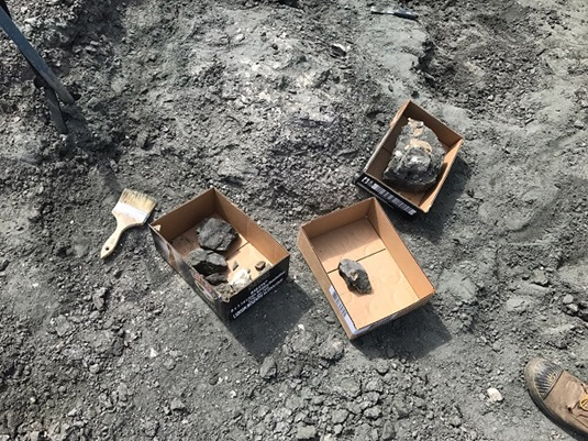 Several Fossils Discovered North of Fort McMurray