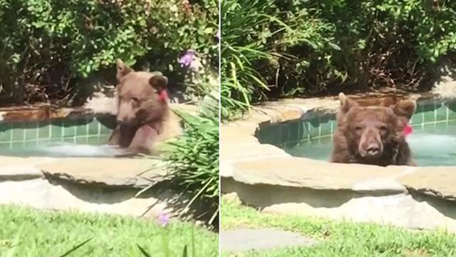 This Bear is Living The DREAM!