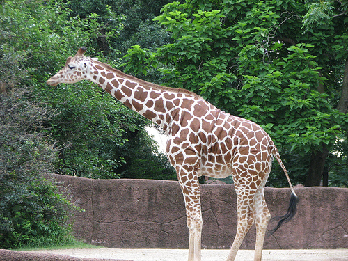 The Internet Has Decided Giraffes Shouldn't Be Real