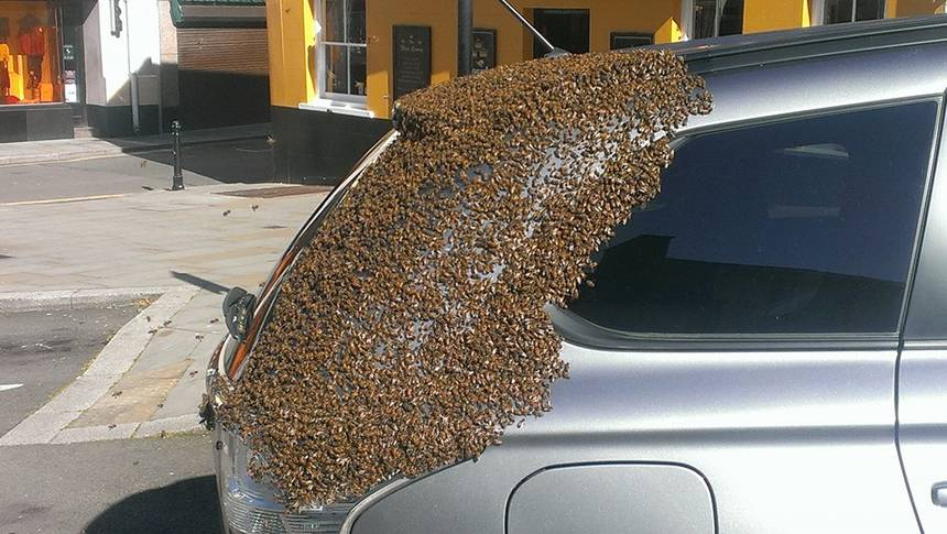 Swarm Of Bees Follow Woman's Car To Save Their Queen