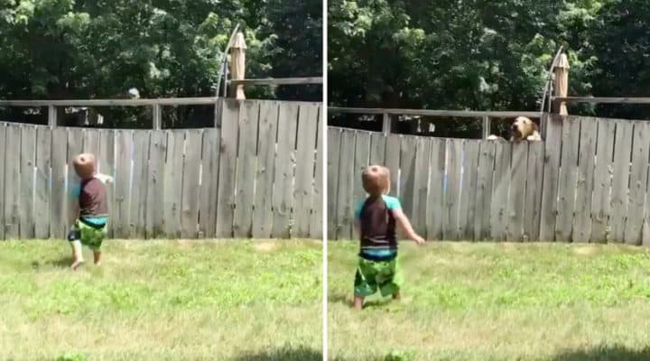 WATCH: Toddler And A Dog Playing Fetch Across A Fence!