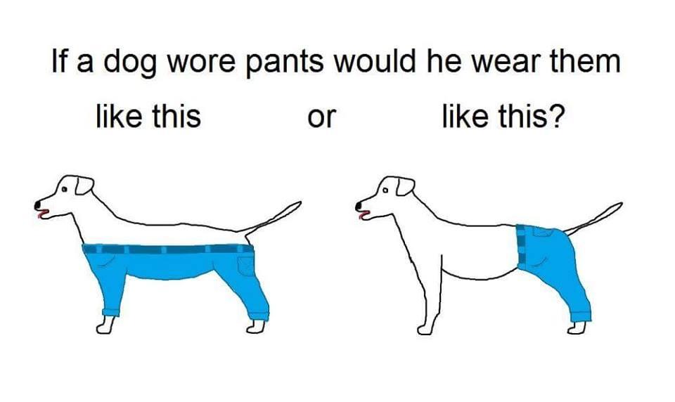 Dog Pants Debate is SOLVED!