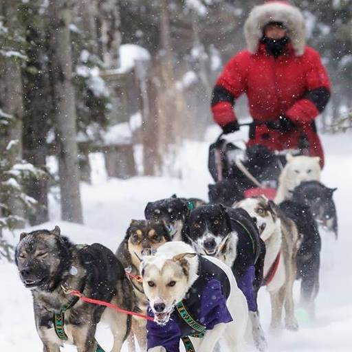 Group Braving Cold Weather To Raise Funds For Centre of Hope, Rescued Sled Dogs