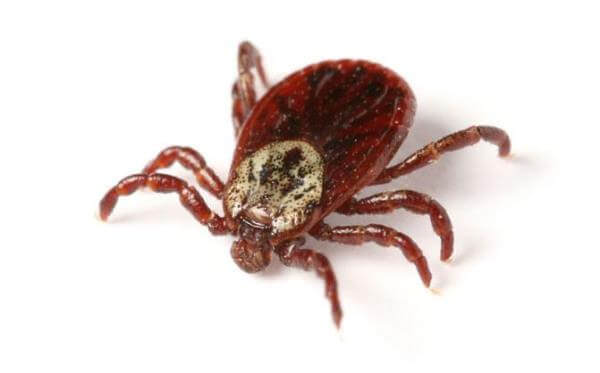 Tick Safety and Beyond