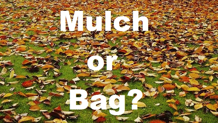 Mulch or Bag?