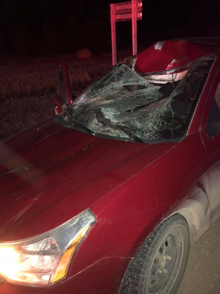 Minor Injuries After A Car Hit A Moose Near Yorkton