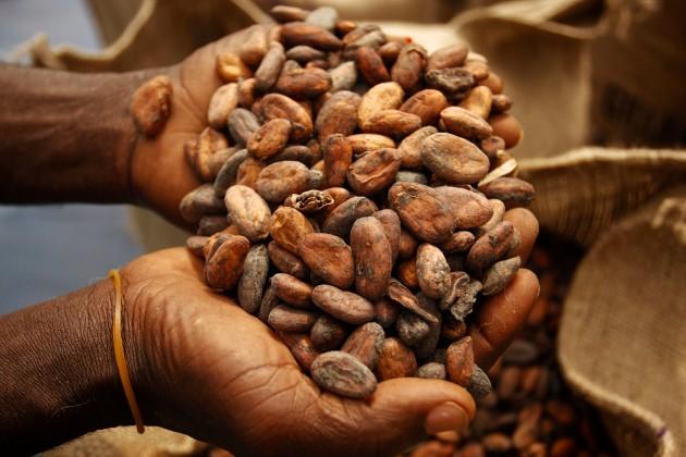 COCOBOD to compensate farmers who cut down unproductive cocoa trees