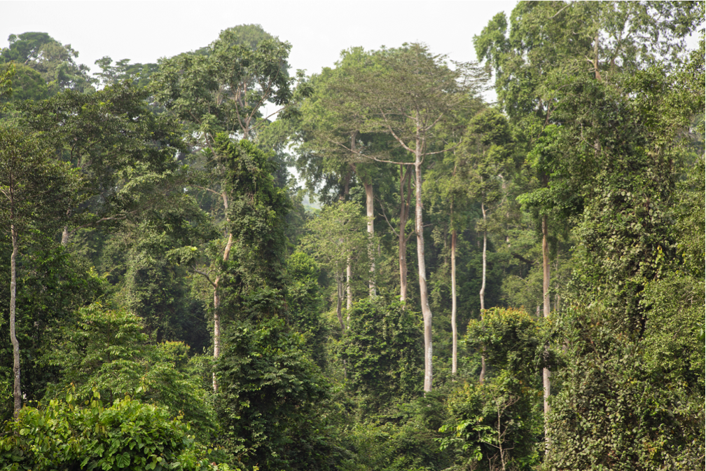 Take Atewa forest out of areas targeted for bauxite mining – FoE Ghana