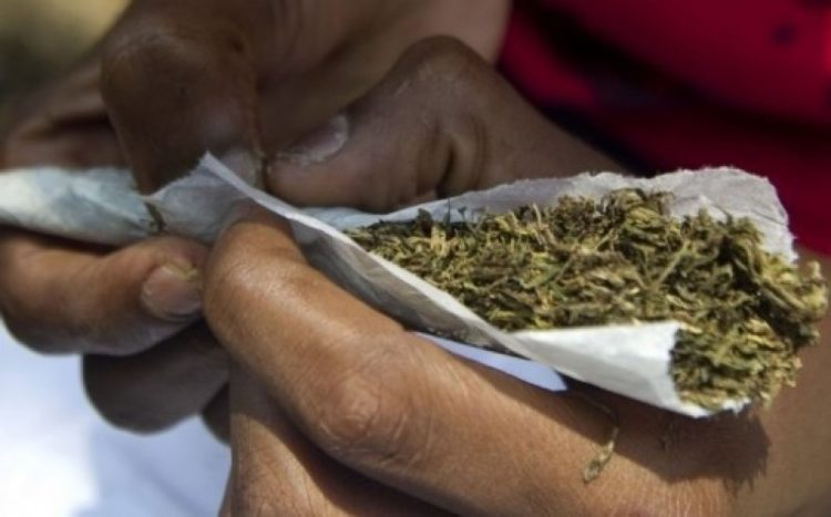Legalise marijuana - Ghana Standards Authority boss