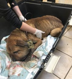 Duncan couple charged in shocking animal cruelty case