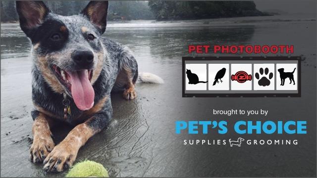 Pet Photobooth (September 2015) :: Luna