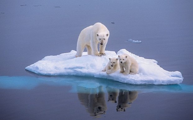 **LISTEN!** Liam's Arctic Polar Bear Encounter