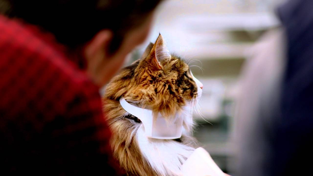 A Cat Collar that Translates Meows to Human