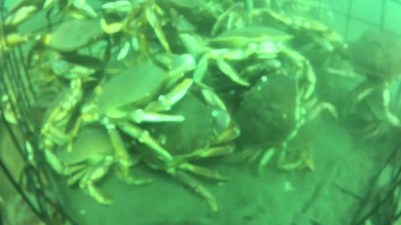 Crazy GoPro Video of a Crab Trap in Victoria