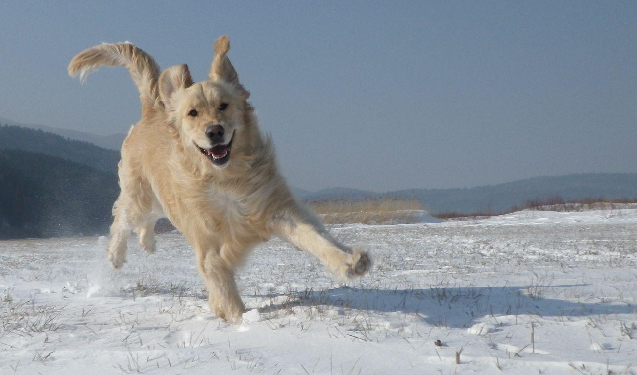 Pet Winter Care