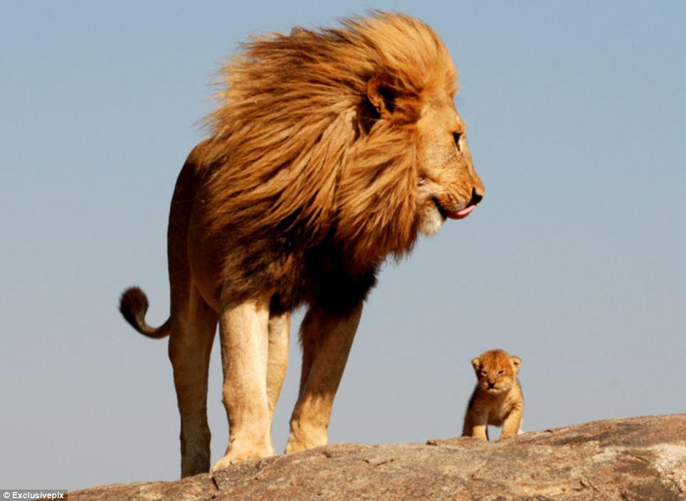Top 9 Animal Dads