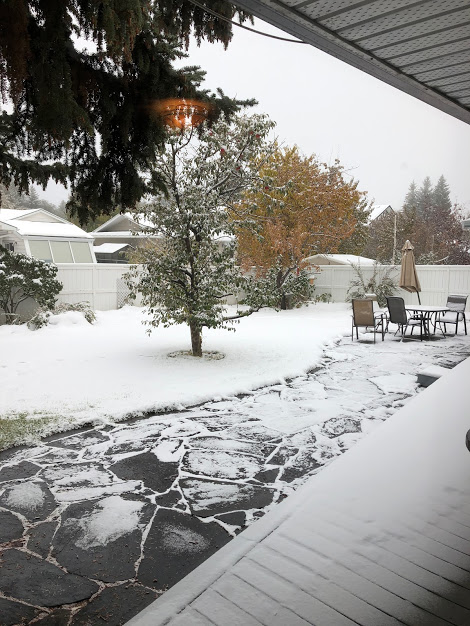 Calgary's snowiest October ever... and it's only the 11th