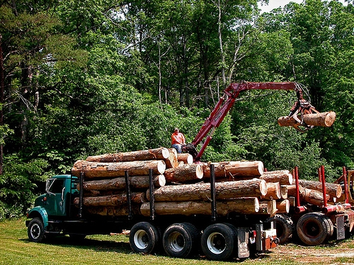 First Nations Timber Deal