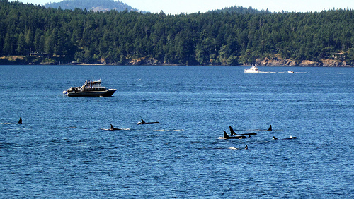 Endangered Orca Recovery Plan