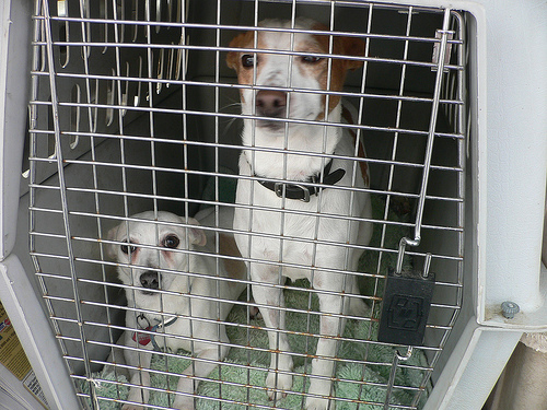 SPCA Seizes Dogs And Horses