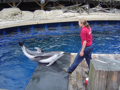 Vancouver Aquarium Ban on Cetaceans