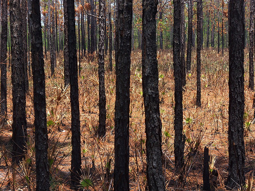 BC Wildfires-Salvageable Timber