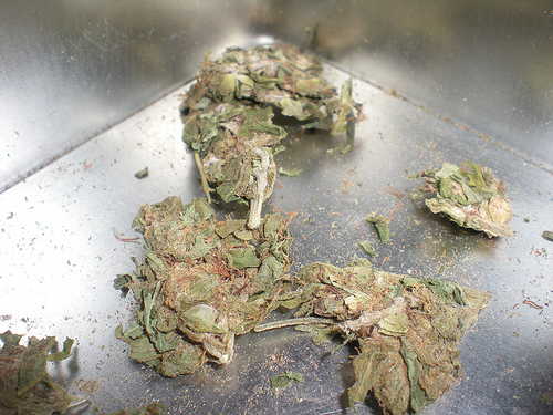 Marijuana-Municipalities